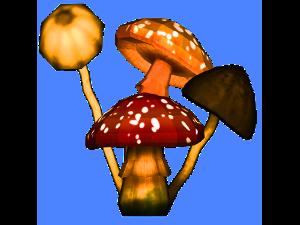 022-Funghi3D